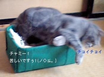 20110119-1blog