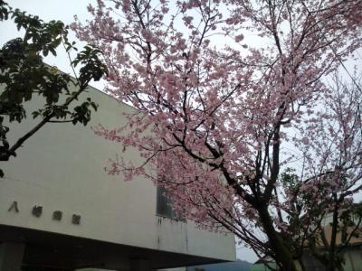 桜 八幡病院前