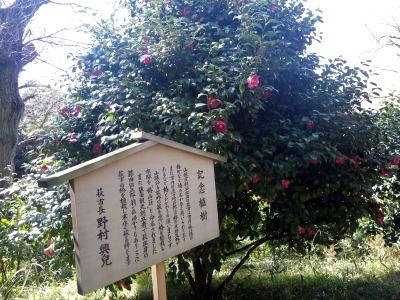 椿山荘 萩からの椿の木