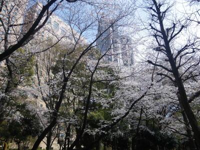 新宿中央公園 桜