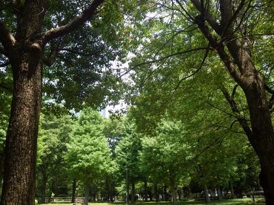 新宿中央公園 みどり