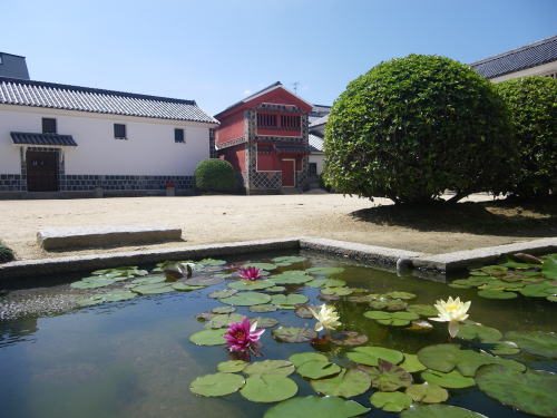 倉敷 大原美術館の睡蓮