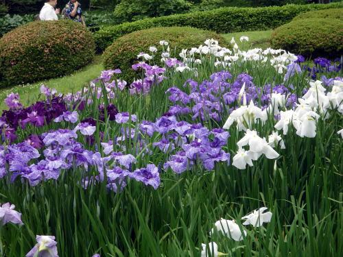 二の丸庭園の菖蒲田