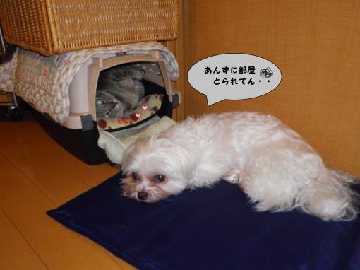 縺ゅs縺壹→繝舌・_convert_20100611015918
