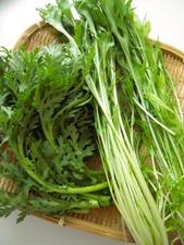 緑なチヂミ2