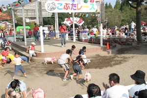 子豚のレース