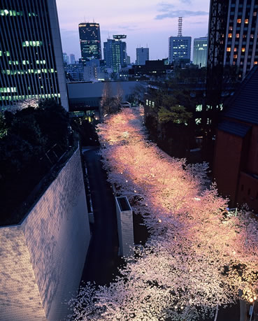 上から見た桜坂2