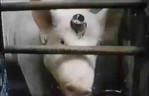 動物実験1
