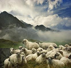 羊たちの沈黙2