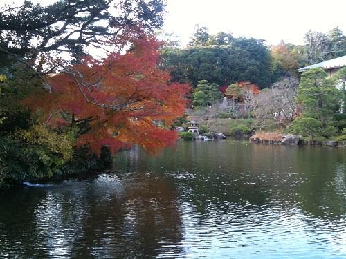 1128成田山公園5