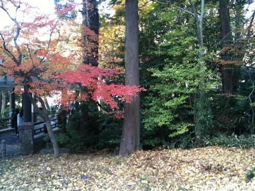 1128成田山公園6