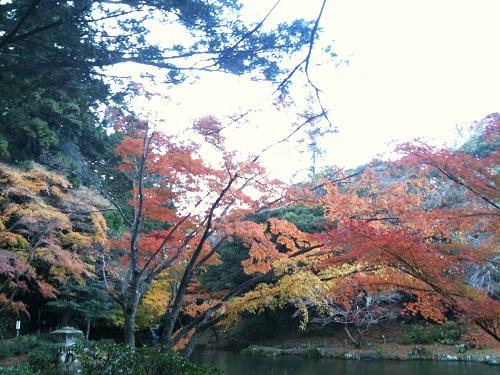 1128成田山公園4