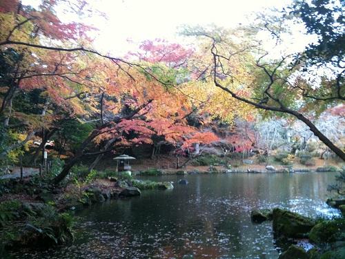 1128成田山公園2