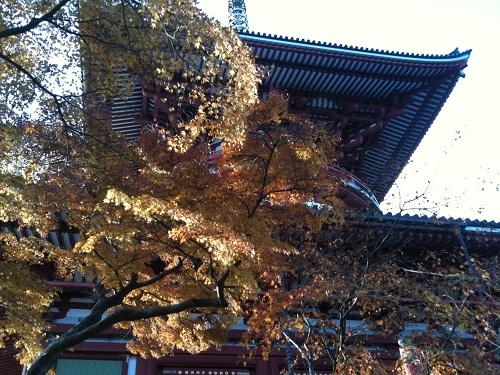 1128成田山公園8