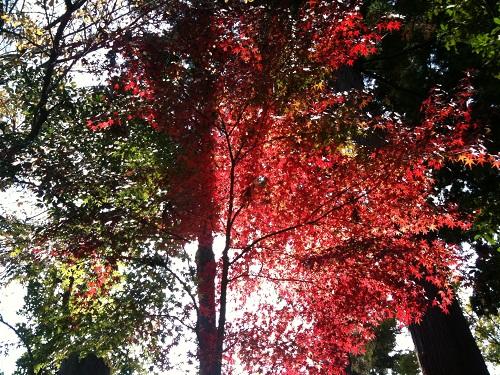 1128成田山公園9