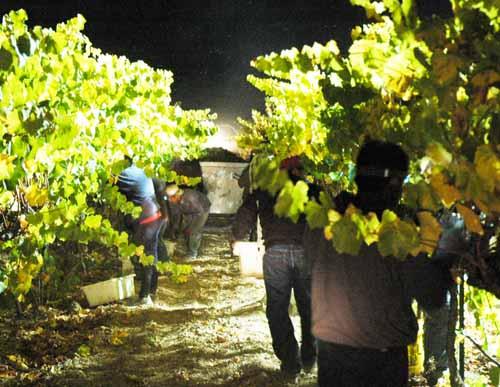 収穫2012,4