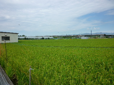 安田農園1