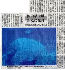 20100901ハマサンゴ