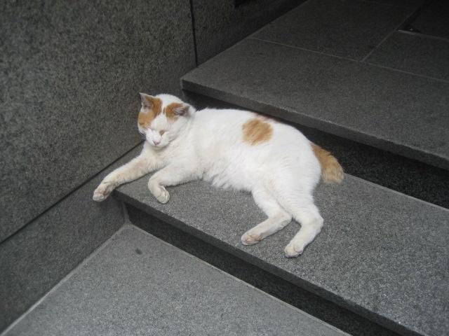 ボザール・ミューの猫