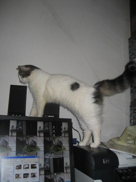パソコン猫 007