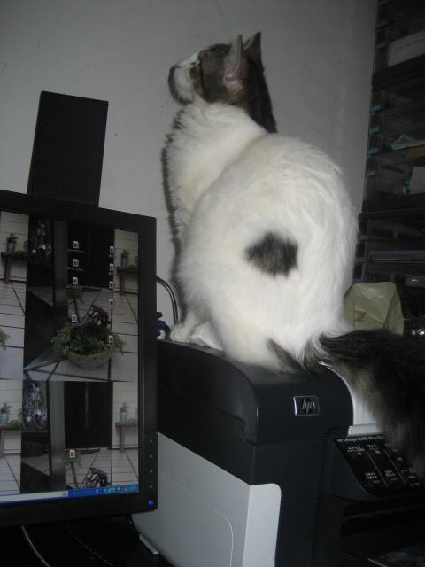 パソコン猫 003