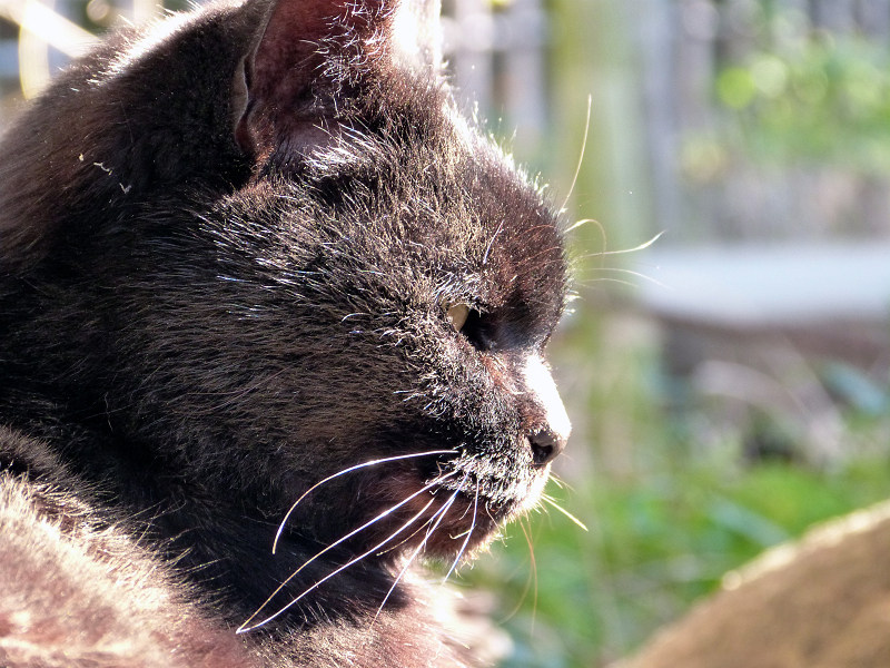 土埃まみれの黒猫