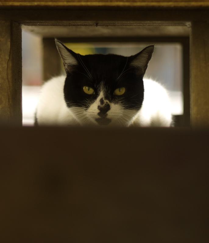ベンチの下でカメラを見てるネコ