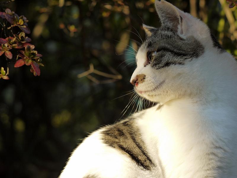 振り返り花を見てるネコ
