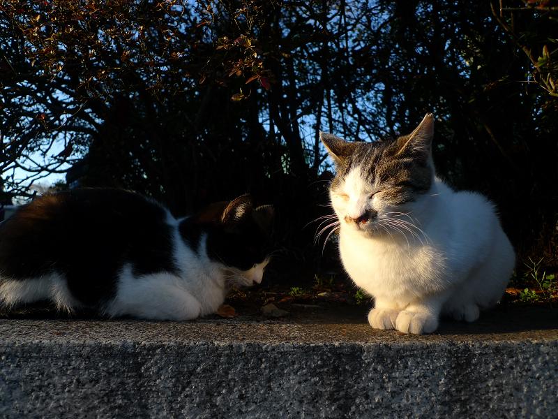 芝垣で寝ている仔猫