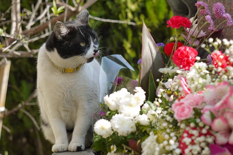 華やかな花とネコ