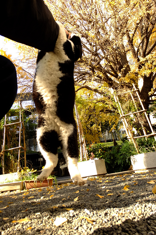 ジャンプして腕にぶら下がるネコ