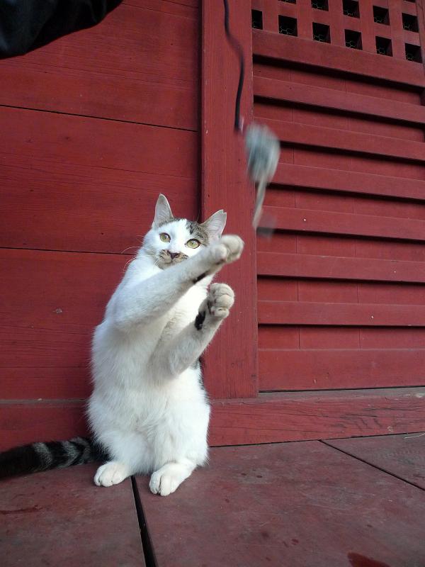 ネズミに空振りパンチのネコ