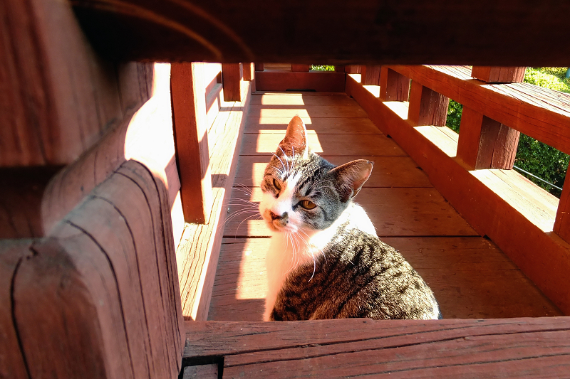 朱色の濡れ縁の睨み顔ネコ
