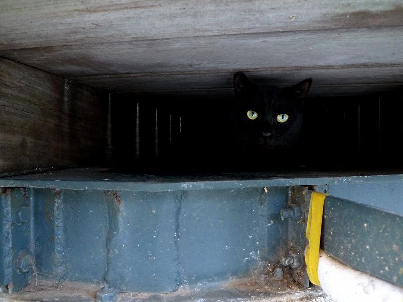 コンクリートの土台の下のネコ