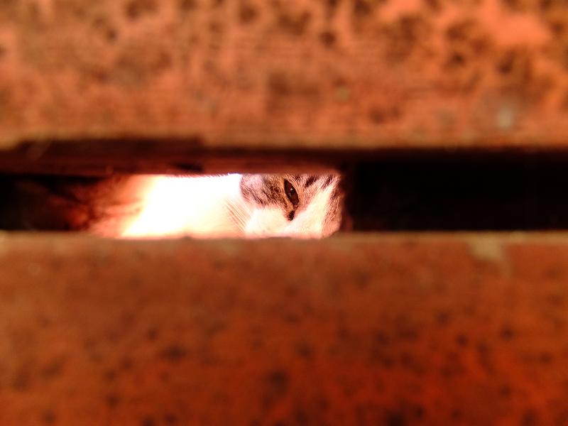床板の隙間から覗くネコ