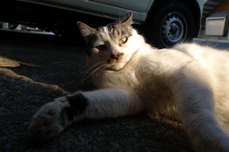 ガレージに差し込む光とネコ