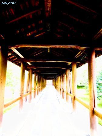 IMG_0993 - コピー