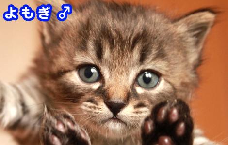 img_yomogi1.jpg