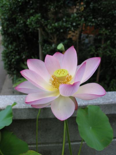 hasu_convert_20110713185131.jpg