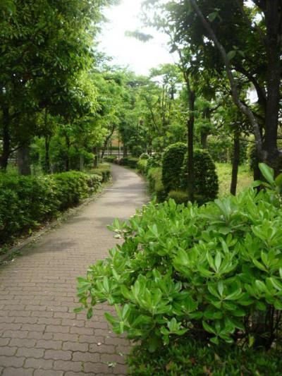 sumaiconvert_20110606132230.jpg
