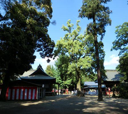 saitama washimiya jinjya 07 20110524_R