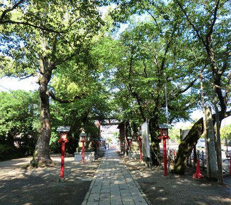 saitama washimiya jinjya 03 20110524_R