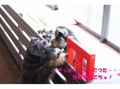 コピー ~ dc040320 コピー1