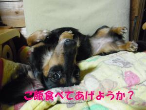 9.15 yomogi2
