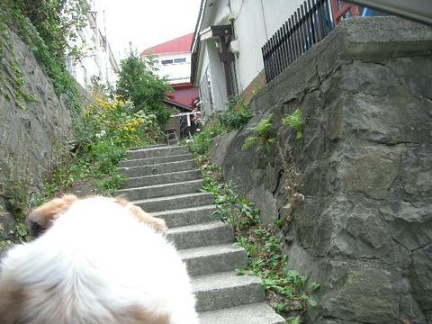 小樽市内家屋---4
