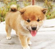 2011年9月12日生まれ オス 赤毛5