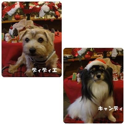 2013-11-142.jpg