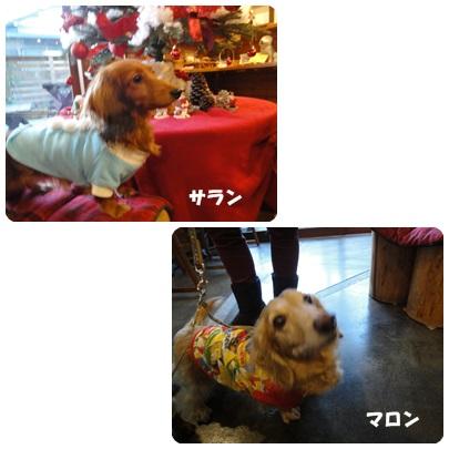 2013-11-151.jpg