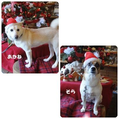 2013-12-70.jpg