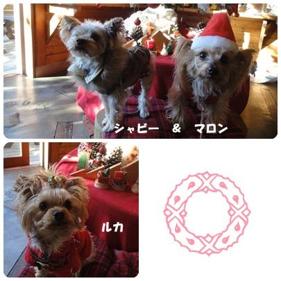 2013-12-80.jpg